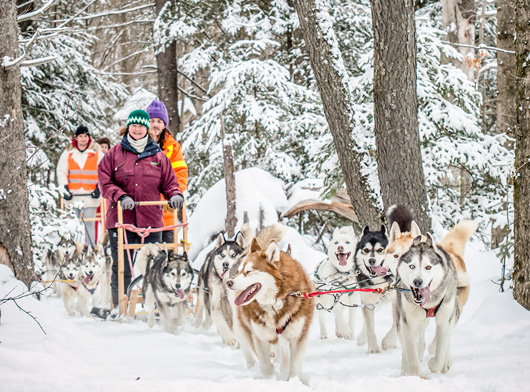 Haliburton-Forest---Dog-Sledding-(1).jpg